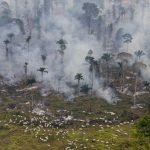 """<!--:es-->""""La policía de Brasil desarticula la """"mayor banda de destructores"""" del Amazonas"""" – El País<!--:--><!--:en-->""""Brazil dismantles 'biggest destroyer' of Amazon rainforest"""" – BBC<!--:-->"""